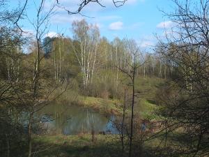 Малиновая засека. Река Свинка.